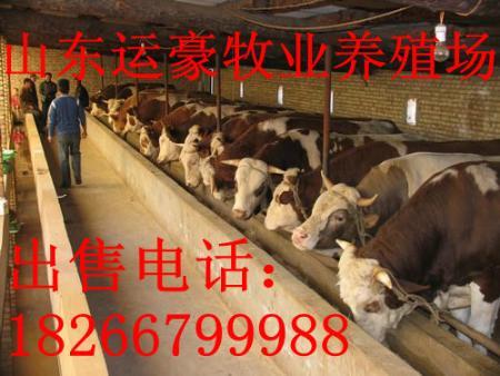供应养牛场建设规划平面图牛场建设图